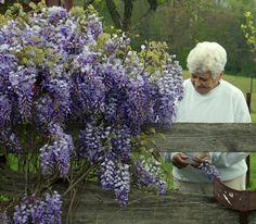 Grandmother's portrait - Southwest Virginia