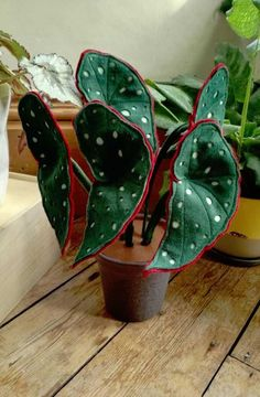 Your place to buy and sell all things handmade – House Plants House Plants Decor, Plant Decor, Exotic Plants, Tropical Plants, Plantes Feng Shui, Wine Gift Baskets, Basket Gift, Decoration Plante, Fabric Houses