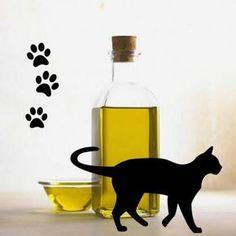 Benefícios do azeite de oliva para os gatos. Depois de muitos estudos, o azeite de oliva chegou a ser considerado como um