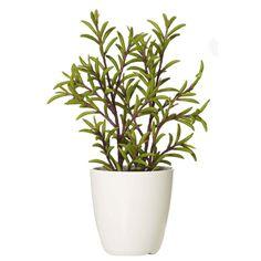 Emporium Potted Succulent Green | Spotlight Australia