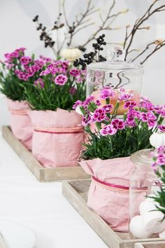 """Mehr als ein Urlaubsflirt: die Mininelke """"Pink Kisses Their filigree flowers can also be wonderfully used for decorative floral arrangements. Mini Carnations, Deco Table, Decoration Table, Pin Collection, Most Beautiful Pictures, Diy Wedding, Floral Arrangements, Diy And Crafts, Centerpieces"""