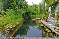 Just before breakfast, another dip in the swimming pond. Closer to the house really does not work anymore. (Swimming pond pond natural garden natural … - All About Swimming Pool Pond, Natural Swimming Ponds, Swimming Pool Landscaping, Natural Pond, Ponds Backyard, Swimming Pool Designs, Natural Garden, Pond Design, Landscape Design
