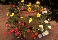 portulaca http://www.hort.purdue.edu/ext/senior/flowers/images/large/portula1.jpg