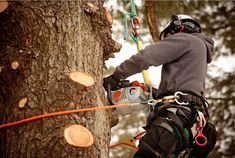 #Tree_pruning is a similar service to tree trimming, the main difference is that is being applied to young trees that have not completely developed, therefore offering the possibility of influencing their shape and development.