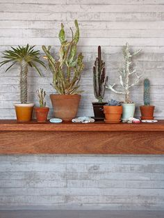 Succulents and cacti in terra cotta pots
