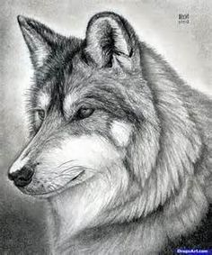 Wolf Sketch - Lots of sketches here