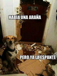 Lo gracioso que son los perros