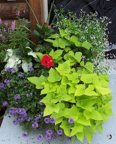 Container Flowers on Pinterest Window Boxes Container