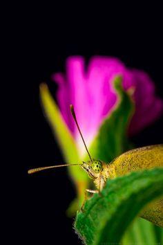 Butterfly by Konstantine Deryabkin on 500px