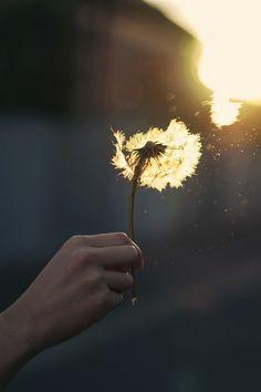 ※Has de tu Vida un sueño ... Y de tu sueño una realidad※