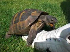 A turtle having sex with a shoe: | 11 Sounds You Need To Hear Before You Die
