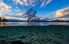 #ThatWanakaTree as you don't usually see it.  Pic: @reillywardrope  _________________________________  #wanaka #seasons #nz #travel #newzealand #kiwi #instatravel #travelgram #spring #nature #northisland #southisland #aotearoa #scenery #sceneryporn #beautiful #cold #ourplanetdaily #neverstopexploring #lonelyplanet #splendid_earth #tourtheplanet #beautifuldestinations #igbest_shotz #naturelovers #roamtheplanet #worldshotz #wanderlust #openmyworld