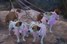 Our children ready for our wedding - May 2012 - Tankwa Karoo, South Africa. #wedding #dog #jackrussel