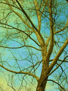 Tree green and blue