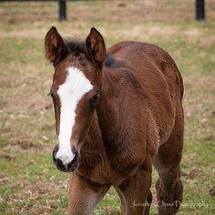 Foals - 3 9 2016 8