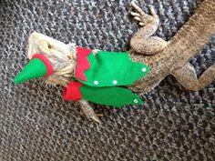 christmas fancy dress santa elf Bearded dragon by Monstertrims