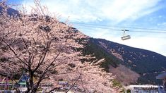 For those who don't enjoy hiking, this cable car can carry 101 passengers at a time to the top of the 1,375-meter-high Mount Tsurumi in 10 minutes. From the top, there's a view of Beppu, Mount Yufu and Kuju Mountain Range. The best time to ride up is during spring when more than 2,000 cherry trees blossom on the mountain.