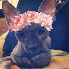 This sassy Sphynx who thinks 2014 is all about the floral accents. | 23 Photos That Prove Hairless Cats Are Actually Adorable