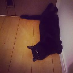 #cat #catstagram #ilovecats #blackcat #ネコ #ねこ #ねこ部 #ふわもこ部 #黒猫 #黒猫同盟 #くろねこ #角がすき