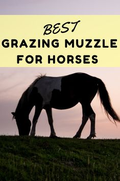 How To Choose The Best Grazing Muzzle For Horses - Horses & Foals Horse Feed, You Got This, Grass, Freedom, How To Get, Good Things, Horses, Homesteading, Board