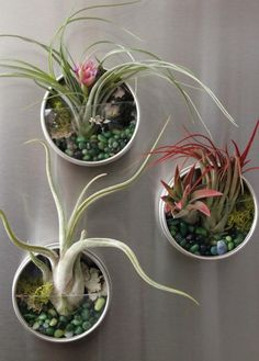 Try adding a few of these tiny terrariums filled with air plants to your refrigerator door.