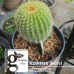 12 Best Putra Garden Tanaman Hias Images Houseplants