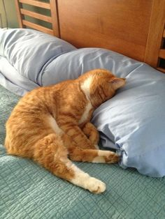 "22 Cats Who Are Pretty Much Over This Whole ""Monday"" Thing"