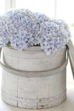 Blue hydrangea barrel