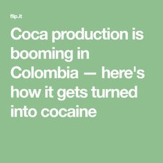 Coca production is booming in Colombia — here's how it gets turned into cocaine