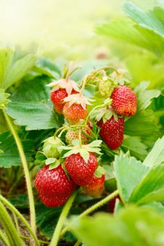 Grow Your Own Fruits, Vegetables & Herbs