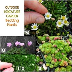 to Choose Living Plants for a Miniature Garden Learn how to choose the best plants for your outdoor miniature garden.Learn how to choose the best plants for your outdoor miniature garden. Fairy Garden Plants, Fairy Garden Furniture, Mini Fairy Garden, Garden Terrarium, Gnome Garden, Fairy Gardening, Succulent Planters, Hanging Planters, Succulents Garden
