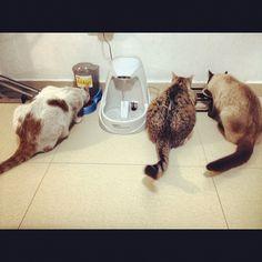 Gatos a cenar!