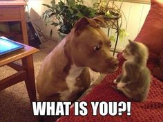 40 Funny Animal Pictures for Today