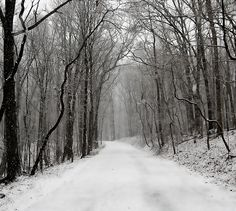 Its snowing today....first snow here in Michigan...11-11-13  dh