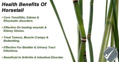 Horsetail Grass Benefits & Side-effects Illness Disease, Disease Symptoms, Wound Healing, Healing Herbs, Teas For Headaches, Herbal Tea Benefits, Tea For Colds, Cold Home Remedies, Natural Remedies