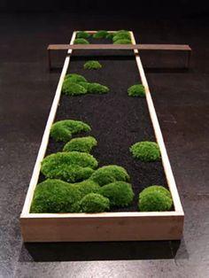 Le design Walker Moosgarten: miniatures Bonsai M - Mini Jardins Japonais Mini Zen Garden, Indoor Zen Garden, Green Garden, Indoor Gardening, Herb Garden, Organic Gardening, Gardening Tips, Modern Planters, Bonsai Garden