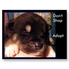 there is not a breed that can't be found in a shelter.  Still feel the urge to shop?