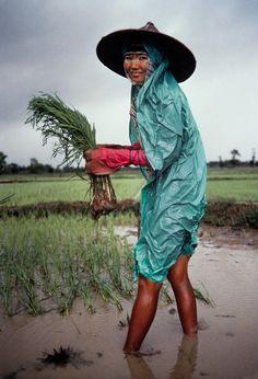 Planting the rice crop amidst monsoon rains, Bago, Burma, photograph by Steve McCurry.