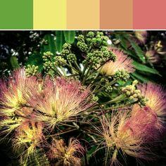 《Fuzzy Tree Palette》