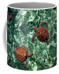 Fragile Underwater World. Sea Turtles in a Crystal Water. Maldives Coffee Mug for Sale by Jenny Rainbow Mugs For Sale, Sea Turtles, Underwater World, Mug Cup, Maldives, Fine Art Photography, Coffee Mugs, Rainbow, Crystals
