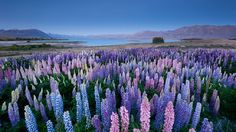 Wakatipu - Nova Zelandia