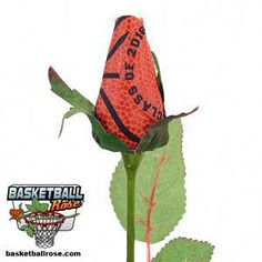 Senior Night Basketball Roses are a unique gift idea for players and parents on senior night. Basketball Tattoos, Basketball Pictures, Basketball Gifts, Sports Gifts, Basketball Players, Girls Basketball, Basketball Shoes, Softball Gifts, Cheerleading Gifts
