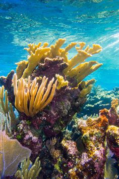 Coral reef found near Turks and Caicos Islands. Under The Ocean, Sea And Ocean, Coral Painting, Underwater Animals, Beautiful Sea Creatures, Beneath The Sea, Ocean Creatures, Exotic Fish, Sea World