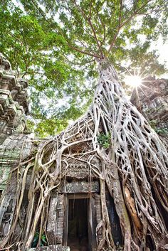 ta prohm, Ang Kor Wat, Siam Reap, Cambodia by Lisa Bettany