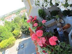 Így varázsolj édenkertet az erkélyből   Balkonada Plants, Plant, Planets