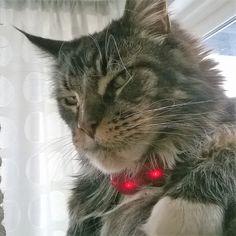 GPS til hund og katt Sims, Animals, Animales, Animaux, Mantle, Animal, Animais, Dieren