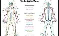 Meridian System Chart - Male body with principal and centerline acupuncture meridians - anterior and posterior view - Traditional Chinese Medicine - Isolated vector illustration on white background. Meridian Acupuncture, Point Acupuncture, Meridian Massage, Qi Gong, Pranayama, Meridian Lines, Body Diagram, Body Chart, Les Chakras