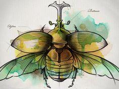 Coleoptera | http://dribbble.com/shots/511214-Coleoptera