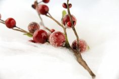 Christmas red berries stock photo