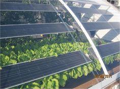 Solar Aquaponic Greenhouse
